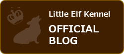 Little Elf Kennel OFFICIAL BLOG