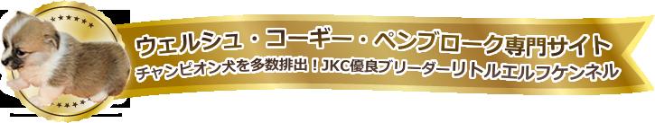 ウェルシュ・コーギー・ペンブローク専門サイトチャンピオン犬を多数排出!JKC優良ブリーダーリトルエルフケンネル