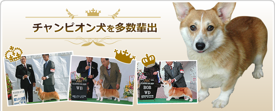 チャンピオン犬を多数輩出