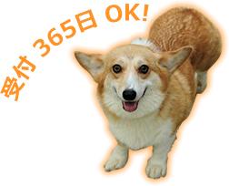 受付365日OK!