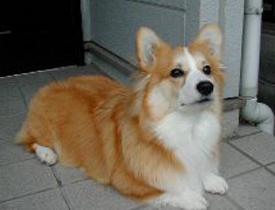 神戸市 樋上様御愛犬 メリーちゃん