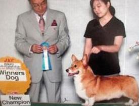 東京都在住 相川様御愛犬 CHロビン君