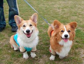 広島県呉市在住の新田さんの愛犬です
