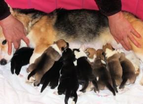 1月28日生まれ9匹 元気にそだっています。