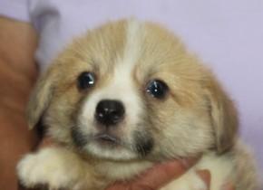 8月2日生まれの可愛い男の子(NO1) 写真更新しました。